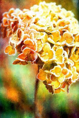 Tangerine Hydrangeas Art Print