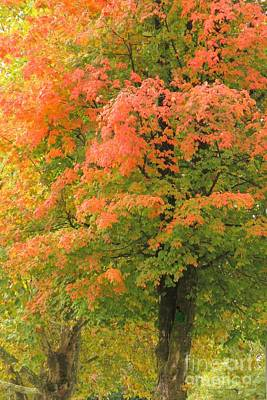 Photograph - Tangerine Maple by Frank Townsley