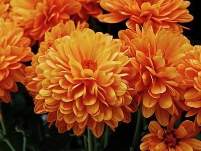 Photograph - Tangerine Mums by Michiale Schneider