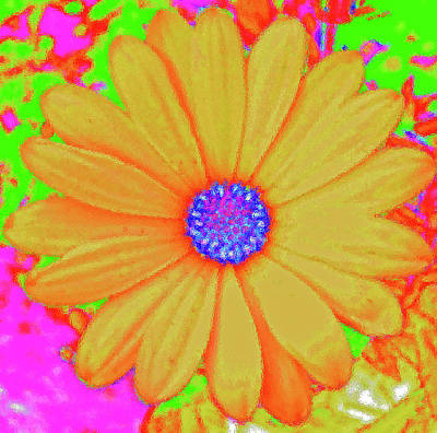 Tangerine Sunshine Art Print by Ann Johndro-Collins