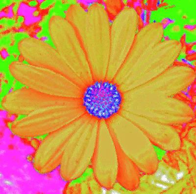 Digital Art - Tangerine Sunshine by Ann Johndro-Collins