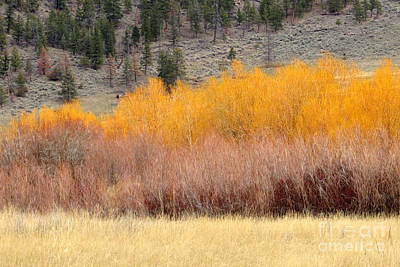 Photograph - Tangerine Willows by Frank Townsley