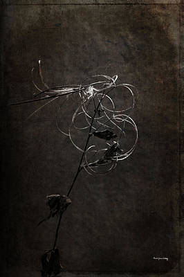Photograph - Tangle And Elegance by Randi Grace Nilsberg