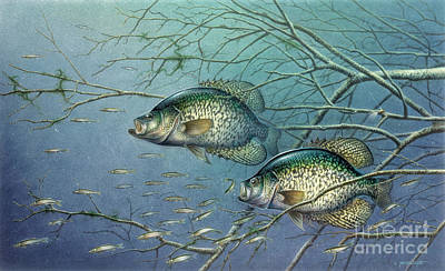 Musky Painting - Tangle Covered Crappie by Jon Wright