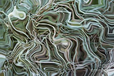Spinach Digital Art - Tangle by Michal Boubin