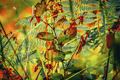 Photograph - Tangle Of Flora by Bonnie Bruno