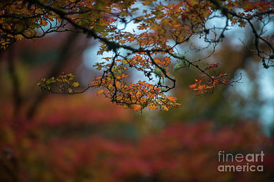 Photograph - Tangled Branches Of Autumn Further by Mike Reid