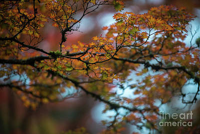 Photograph - Tangled Branches Of Autumn by Mike Reid