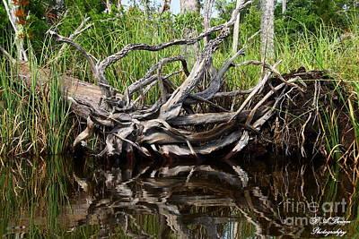 Photograph - Tangled Cypress Roots by Barbara Bowen