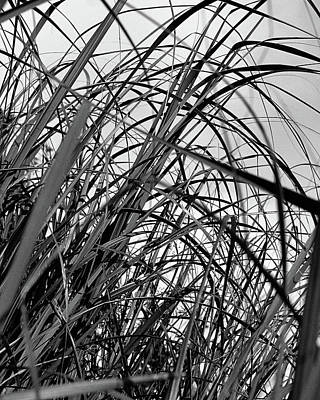 Art Print featuring the photograph Tangled Grass by Susan Capuano