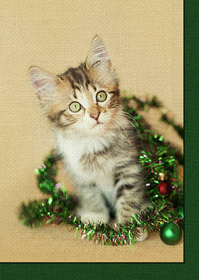 Photograph - Tangled Tinsel Kitty by Kelly Richardson