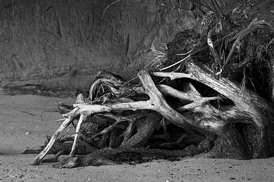 Photograph - Tangled Knots - Tree Roots by Jane Eleanor Nicholas