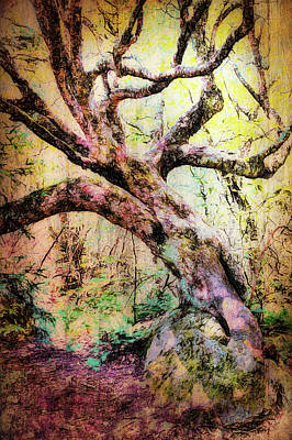 Photograph - Tangled Tree Fx by Dan Carmichael