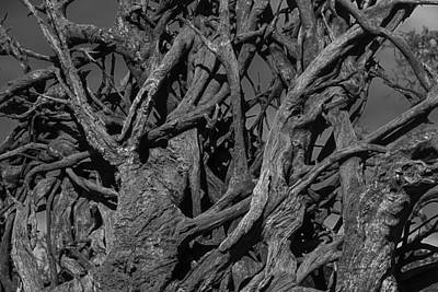 Tree Roots Photograph - Tangled Tree Roots by Garry Gay