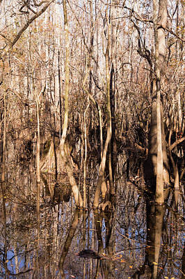 Photograph - Tangled Trees In The Swamp At Waccamaw River Park by MM Anderson