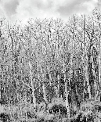 Photograph - Tangled Trees No. 3-1 by Sandy Taylor