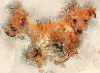 Watercolor Pet Portraits Digital Art - Tangled Twins - Chihuahua Puppy Watercolor by Rayanda Arts