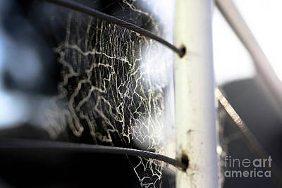 Photograph - Tangled Web We Weave by Kip Krause