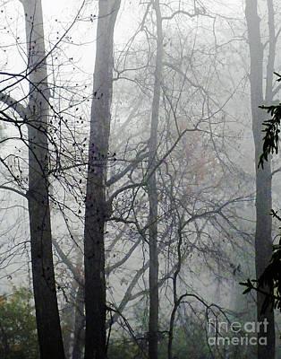 Photograph - Tanglewood Fog by Lizi Beard-Ward