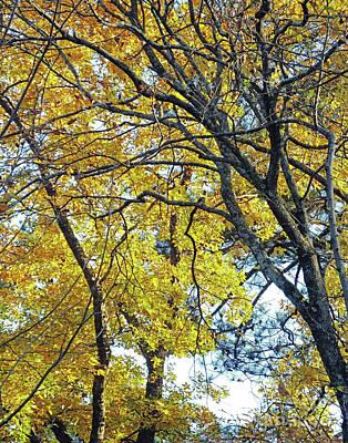 Photograph - Tanglewood Gold 1 by Lizi Beard-Ward