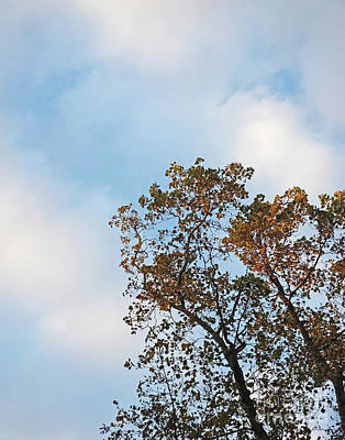 Photograph - Tanglewood Sky Atlanta Oct 2016 by Lizi Beard-Ward
