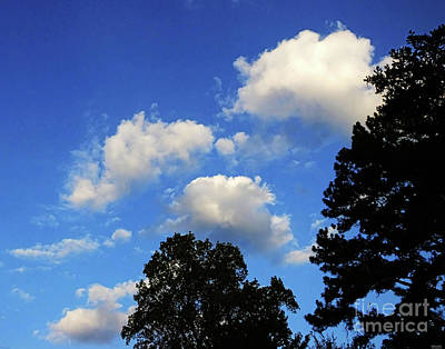 Photograph - Tanglewood Sky Dekalb County Ga by Lizi Beard-Ward