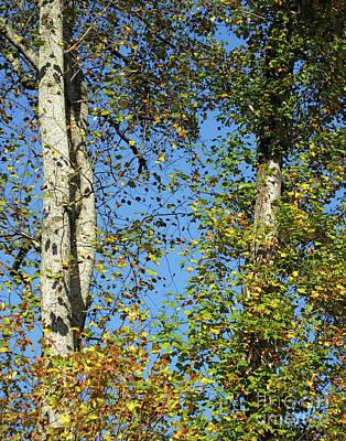 Photograph - Tanglewood Tree Georgia by Lizi Beard-Ward