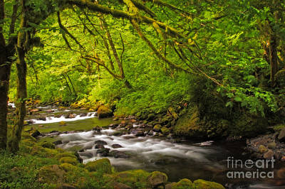 Photograph - Tanner Creek Golden by Sonya Lang