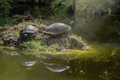 Photograph - Tanning Turtles by Vanessa Valdes
