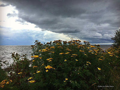 Photograph - Tansy On Shores Of Gitche Gumee by Kathy M Krause