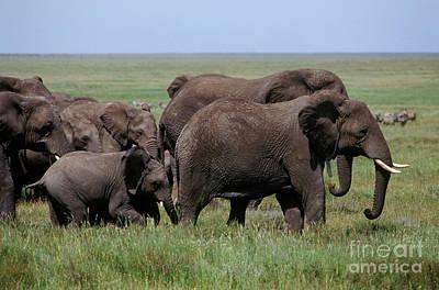 Photograph - Tanzania_105-15 by Craig Lovell