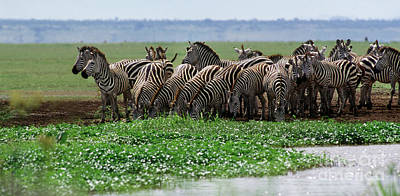 Photograph - Tanzania_12-15 by Craig Lovell