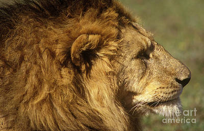 Photograph - Tanzania_57-20 by Craig Lovell