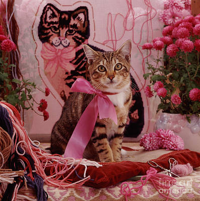 Photograph - Tapestry Tabby by Warren Photographic