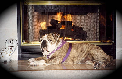 Photograph - Tara Relaxing By The Fire by Jeanne Kay Juhos