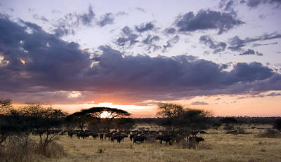 Sky Photograph - Tarangire Sunset by Adam Romanowicz