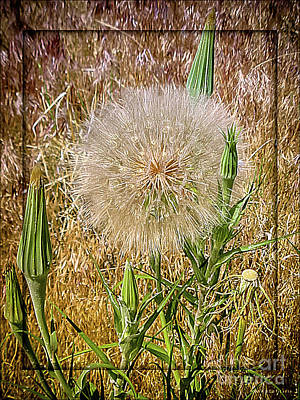 Dandelion Digital Art - Taraxacum by Mona Stut