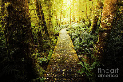 Boardwalk Wall Art - Photograph - Tarkine Tasmania Trails by Jorgo Photography - Wall Art Gallery