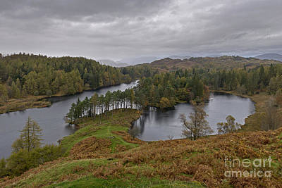 Tarn Hows Drenched Art Print by Richard Thomas