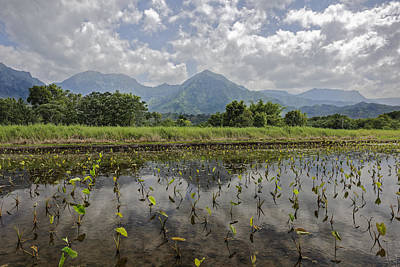 Photograph - Taro Of Hanalei by Jon Glaser