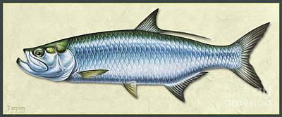 Painting - Tarpon Id by Jon Q Wright