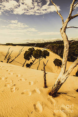 Photograph - Tasmanian Desert Tree Landscape by Jorgo Photography - Wall Art Gallery