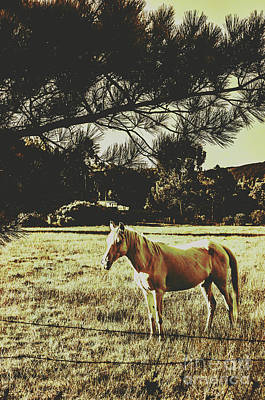 Equine Photograph - Tasmanian Rural Farm Horse by Jorgo Photography - Wall Art Gallery