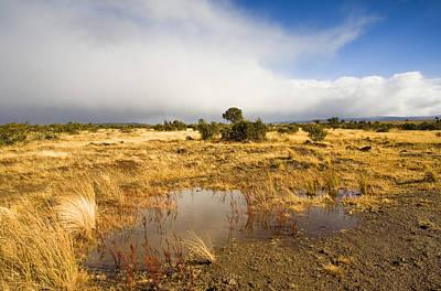 Tasmanian Storm  Original
