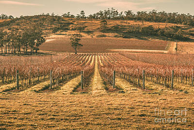 Grapevines Photograph - Tasmanian Winery In Winter by Jorgo Photography - Wall Art Gallery