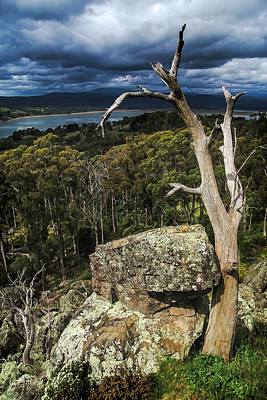 Tasmania's Tamar River Art Print by Shaun Poole