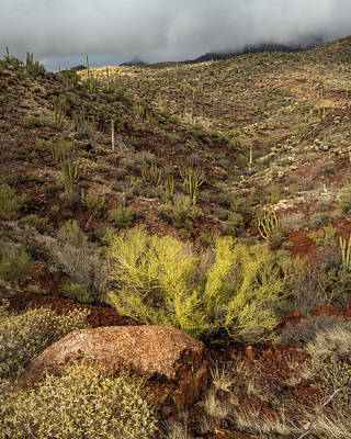 Organ Pipes Photograph - Taste The Southwest by Joseph Smith
