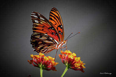 Photograph - The Taster Gulf Fritillary Butterfly Art by Reid Callaway