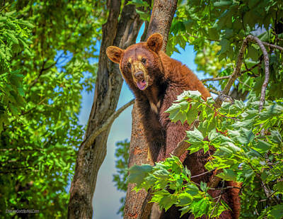 Photograph - Tasty Bear by LeeAnn McLaneGoetz McLaneGoetzStudioLLCcom
