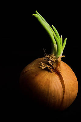 Onion Wall Art - Photograph - Tasty Onion by Thomas Splietker